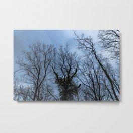 Creepy naked trees, blue sky Metal Print