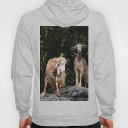 Goats In Calabria Italy Hoody