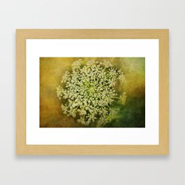 Queen Anne's Lace Flower Framed Art Print