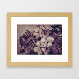 Geraniums -- Monochrome Floral in Aubergine Framed Art Print