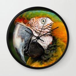 Blue Throated Macaw Wall Clock
