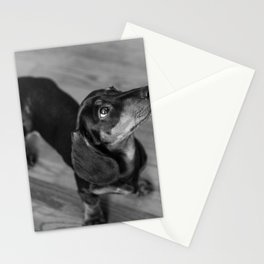 Weenie dog closeup (black and white) Stationery Cards
