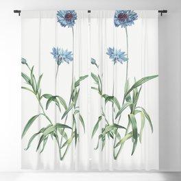 Blue flower from La Botanique de J J Rousseau by Pierre-Joseph Redoute (1759-1840) Blackout Curtain