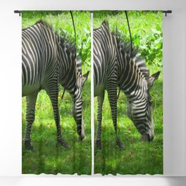 Zebra Blackout Curtain