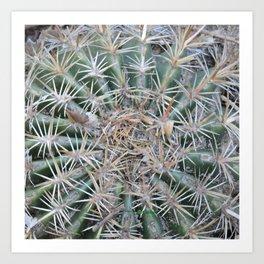 TEXTURES -- Coast Barrel Cactus Art Print