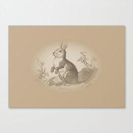 Bunny Rabbit {teddy bear brown} Canvas Print