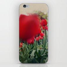 Red Tulips iPhone & iPod Skin
