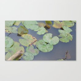 Lillypads Canvas Print