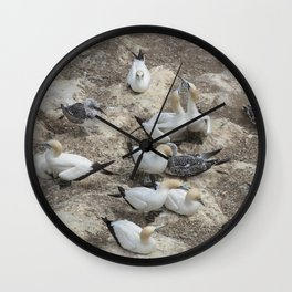 Gannets in a row Wall Clock