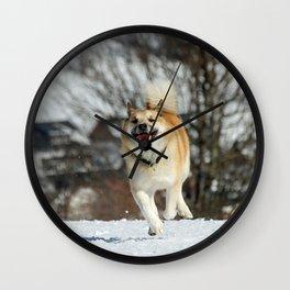 Icelandic Sheepdog 016 Wall Clock