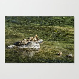 We're Supposed To Be Napping Canvas Print