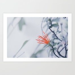 Red Flower Against White Wall Art Print