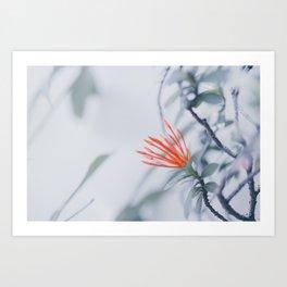 Red Flower Against White Wall Art Print
