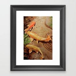 Three Koi Framed Art Print