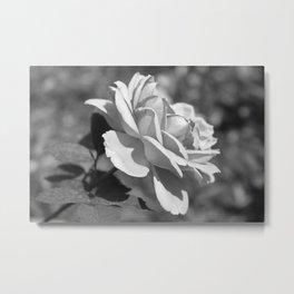 Single Simplicity Metal Print