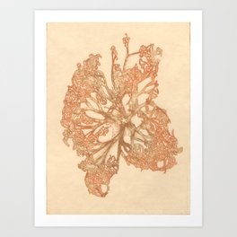 butterfly starfish Art Print