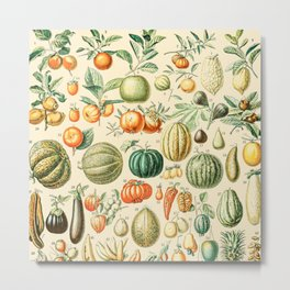 Autumn Harvest // Fruits by Adolphe Millot XL 19th Century Pumpkins Science Textbook Artwork Metal Print