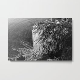 Dripping ice along the Pines Metal Print