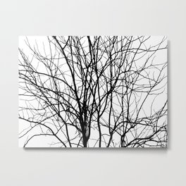 Tree Branches in B&W Metal Print