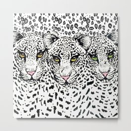 THREE SNOW LEOPARDS Metal Print