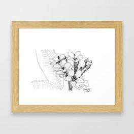 Araliya flower Framed Art Print