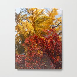 Autumn Ginko Metal Print