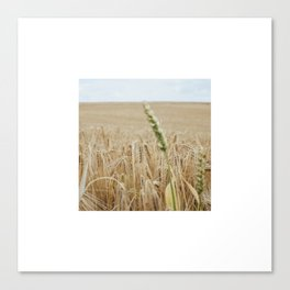 French Wheat Field Canvas Print