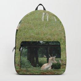 Deer Grazing in a Field Backpack