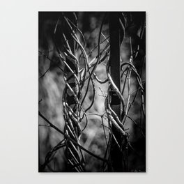 Twisted & Tangled Canvas Print