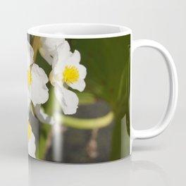 Arrowroot bloom Coffee Mug