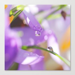 Natural raindrops slide / Natürliche Regentropfen Rutsche Canvas Print