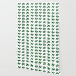 Echeveria Succulent Wallpaper