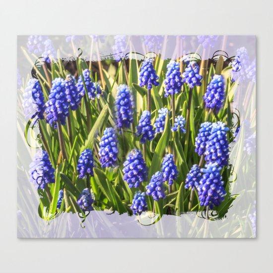 Grape hyacinths muscari Canvas Print