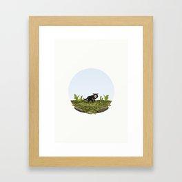 Tasmanian devil (Sarcophilus harrisii) Framed Art Print