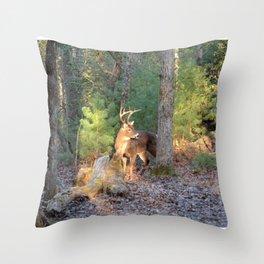 Deer Buck Cades Cove, TN Throw Pillow