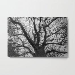 Tree Bones Metal Print