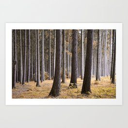 Into the pine forest we went Art Print