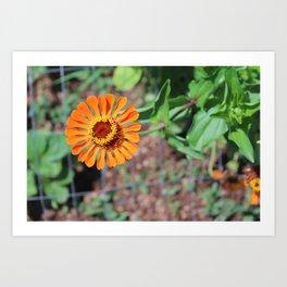 Flower No 5 Art Print