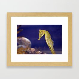 Sea Horse Photo Framed Art Print