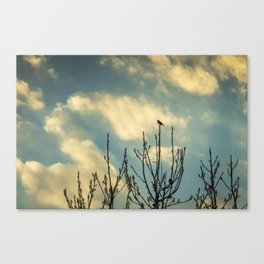 Up On Top Canvas Print