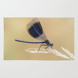 Banded Demioselle On Grass Rug