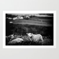 lamb Art Prints featuring Lamb by BethWold