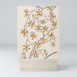 Flower 030 oncidium sphacelatum Scorched Oncidium25 Mini Art Print