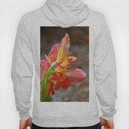 A Promise of More Hoody