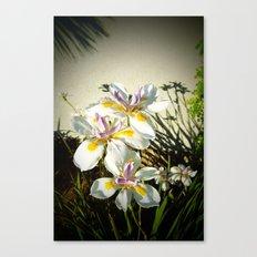 African White Iris DPGP160719a Canvas Print