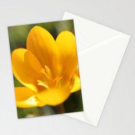 Krokusse Stationery Cards