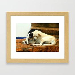 Like cats and dogs Framed Art Print
