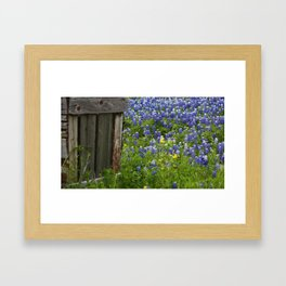 Bluebonnets Framed Art Print