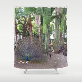 Peacock in Atlantic Garden, Hilton, San Juan, Puerto Rico Shower Curtain