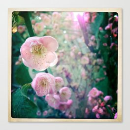 Bloom1 Canvas Print